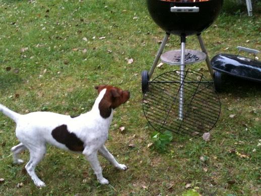 Hundar förstår tonfall och röstkvalitet